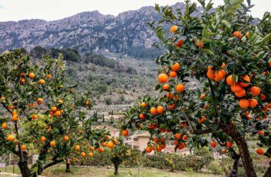 Fornalutx, Majorca, Spain