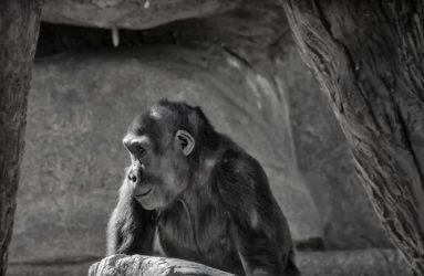 San Diego Zoo, CA
