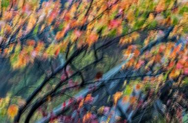 Session Woods, Burlington, CT