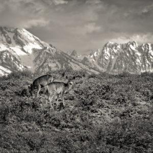 Grand Tetons, Jackson Hole, WY
